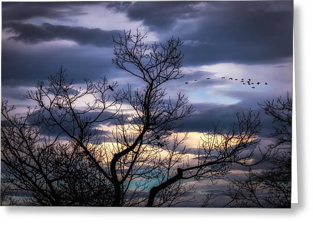 Winter Night Greeting Cards - Between Seasons Greeting Card by Bob Orsillo