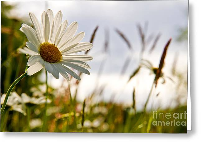 Violett Greeting Cards - Between the grass Greeting Card by Christine Sponchia