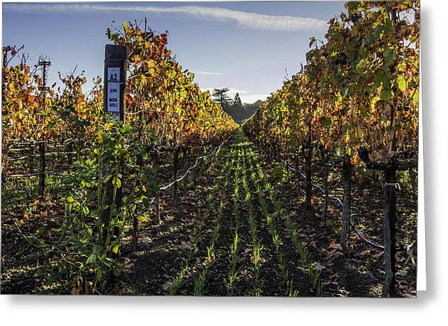 Northern California Vineyards Greeting Cards - Between the Rows Greeting Card by Bill Gallagher
