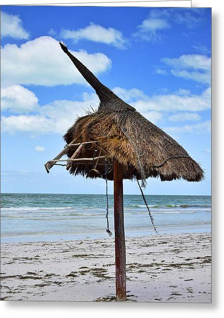 Thatch Greeting Cards - Bewitched Greeting Card by Skip Hunt
