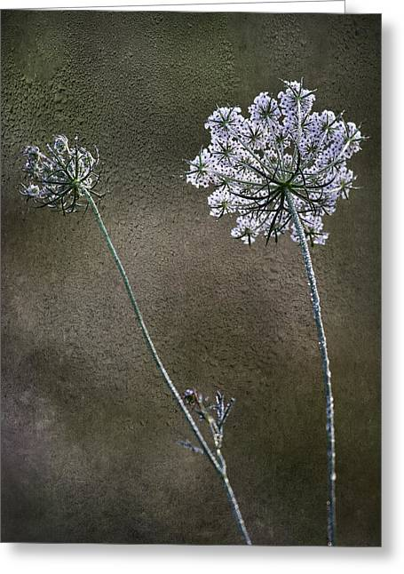 Dew Digital Art Greeting Cards - Beyond The Dew Greeting Card by Dale Kincaid