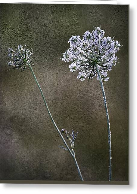 Dew Digital Greeting Cards - Beyond The Dew Greeting Card by Dale Kincaid