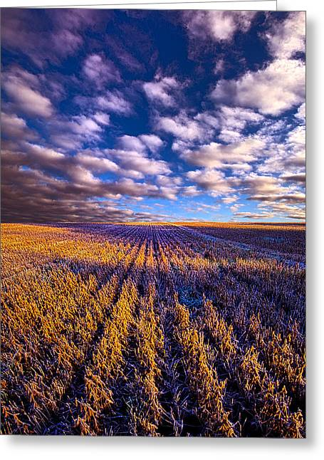 Frost Photographs Greeting Cards - Beyond the Fall Greeting Card by Phil Koch