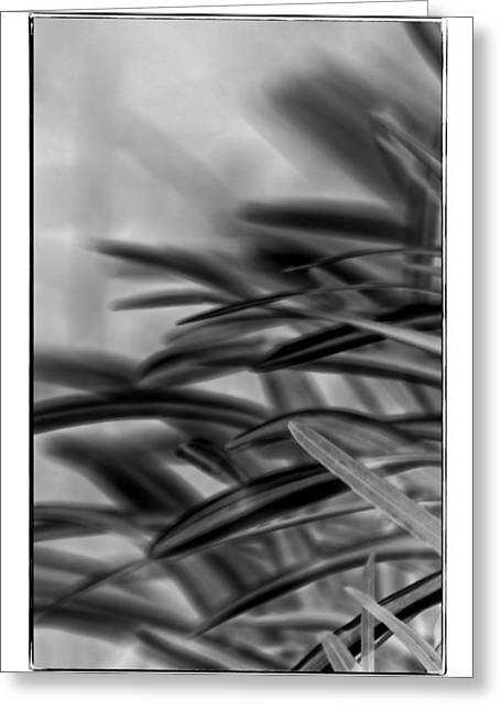 Blade Of Grass Greeting Cards - Beyond The Grass Greeting Card by Carolyn Marshall