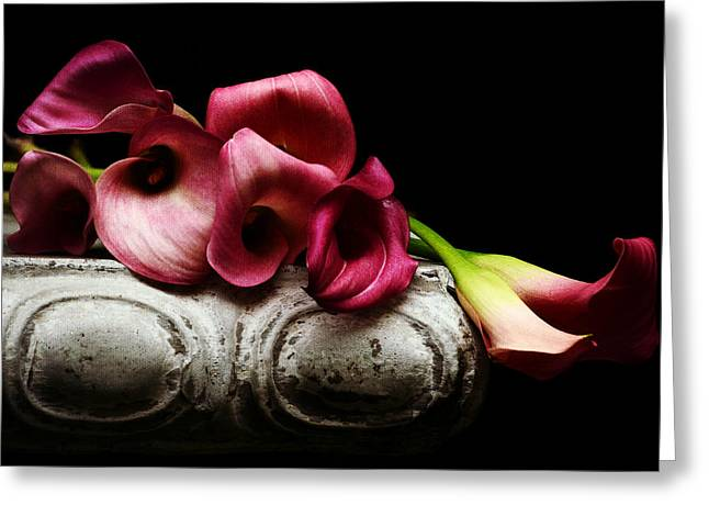 Pink Calla Lilies Greeting Cards - Beyond The Shadow 2 Greeting Card by Fraida Gutovich