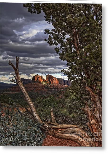 Cathedral Rock Greeting Cards - Beyond the Shaggy Bark Juniper Greeting Card by Medicine Tree Studios