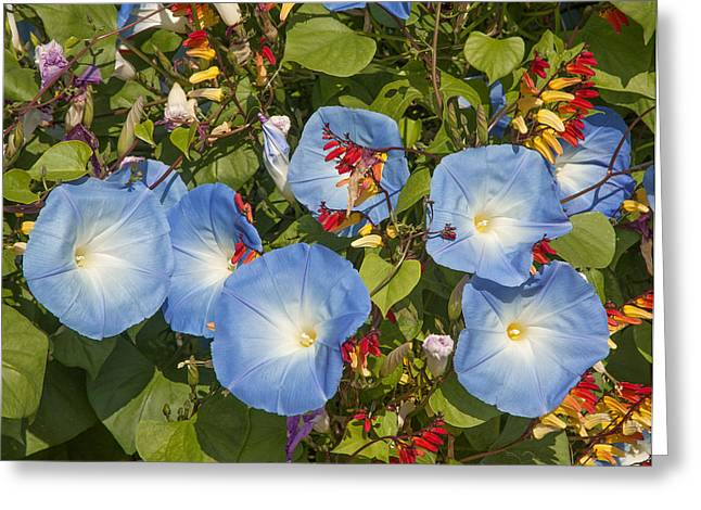 Suthep Greeting Cards - Bhubing Palace Gardens Morning Glory DTHCM0433 Greeting Card by Gerry Gantt