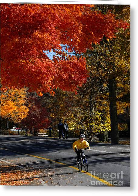 Recreation Greeting Cards - Bicyclist in Park during Autumn Greeting Card by Amy Cicconi