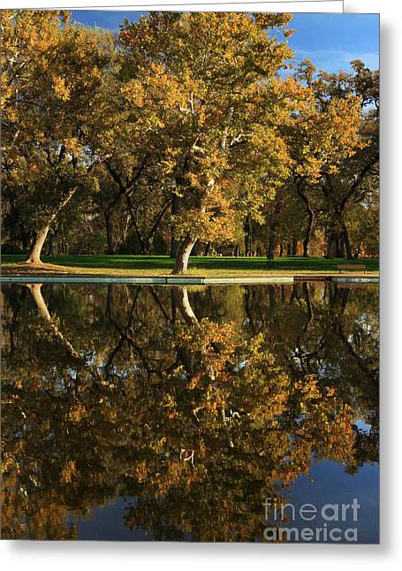 Tree. Sycamore Greeting Cards - Bidwell Park Reflections Greeting Card by James Eddy