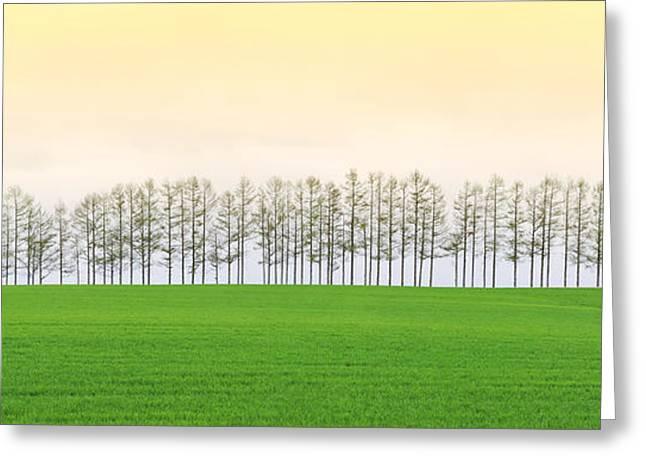 Famous Artist Greeting Cards - Biei tree original med view Greeting Card by Hakai Matsu