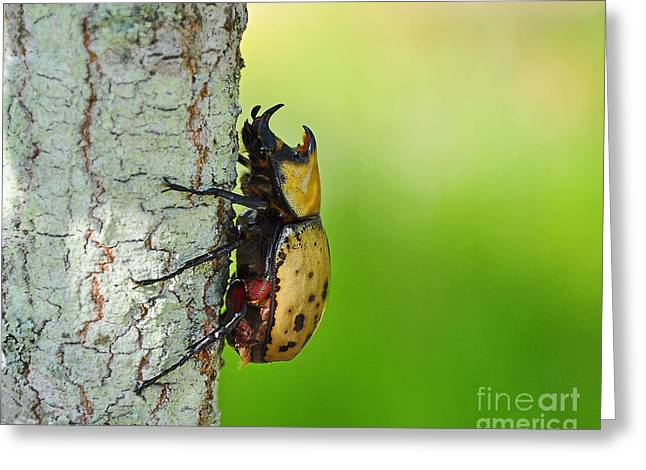 Scarab Greeting Cards - Big Bad Beetle Greeting Card by Al Powell Photography USA