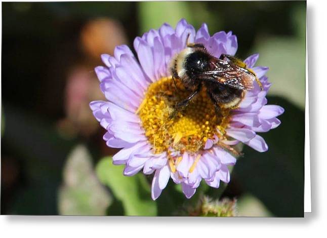 Black Widow Greeting Cards - Big Bee Greeting Card by Ru Tover
