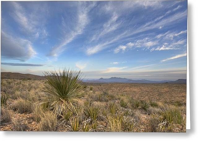 Wildflower Photos Greeting Cards - Late Morning in Big Bend National Park Greeting Card by Rob Greebon