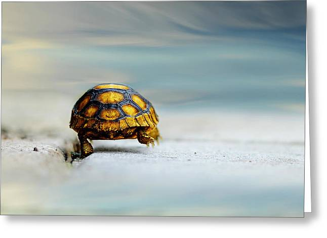 Tortoise Greeting Cards - Big Big World Greeting Card by Laura Fasulo