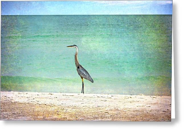 Water Fowl Greeting Cards - Big Blue Heron Greeting Card by Judy Hall-Folde