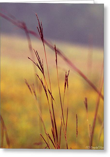 Recently Sold -  - Fall Grass Greeting Cards - Big Bluestem  Greeting Card by Crystal Heitzman Renskers
