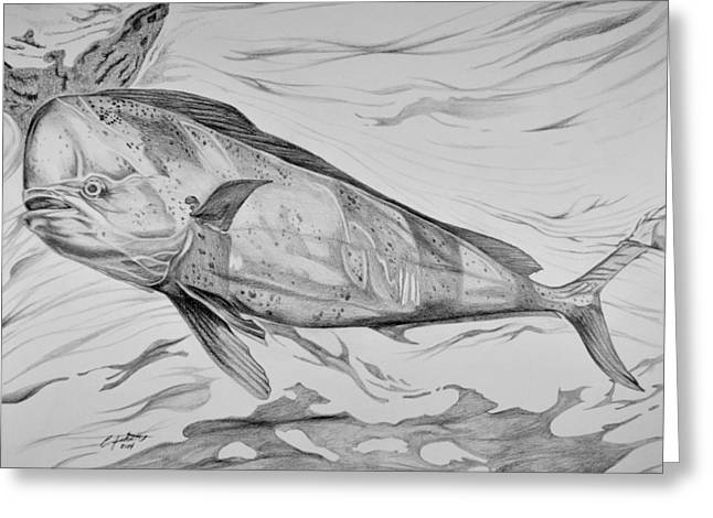 Sport Fish Greeting Cards - Big Bull Dolphin Greeting Card by Edward Johnston