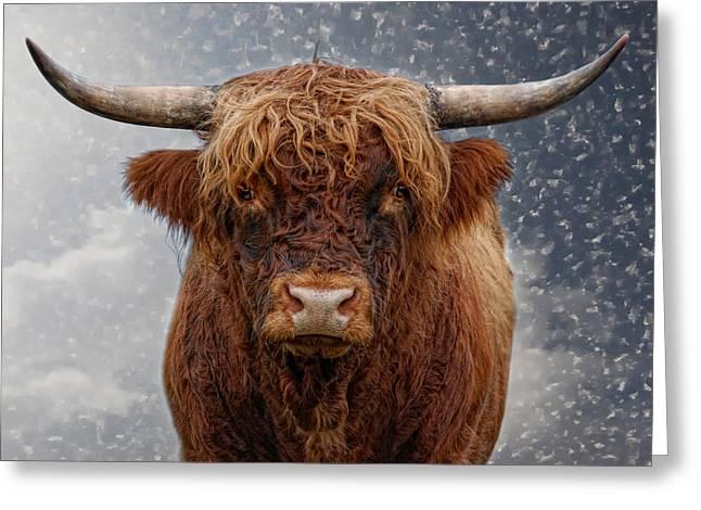 Big Bull Greeting Card by Joachim G Pinkawa