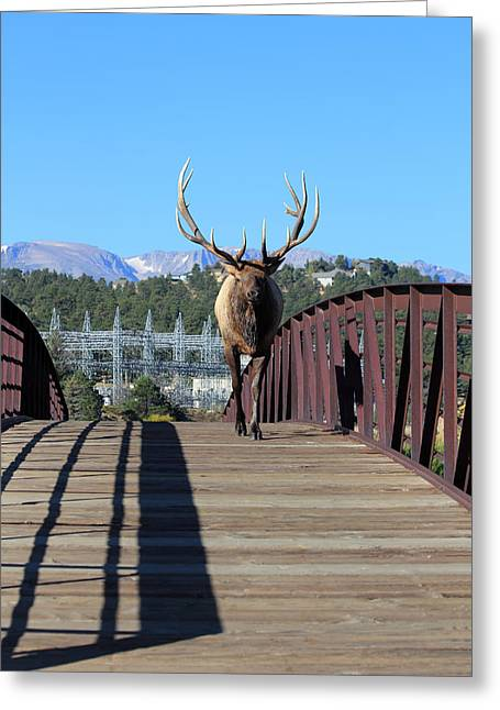 Huge Eyes Greeting Cards - Big Bull On The Bridge Greeting Card by Shane Bechler