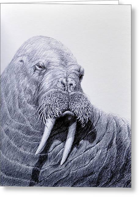 Wild Life Drawings Greeting Cards - Big Bull Greeting Card by Rick Hansen
