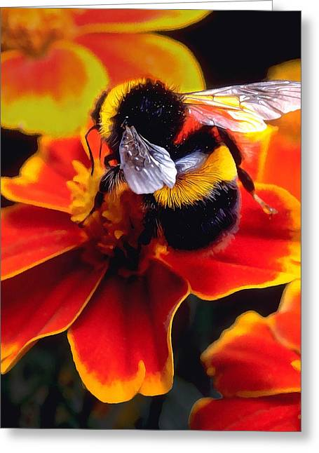 Modern Photographs Greeting Cards - Big Bumble Greeting Card by Bill Caldwell -        ABeautifulSky Photography