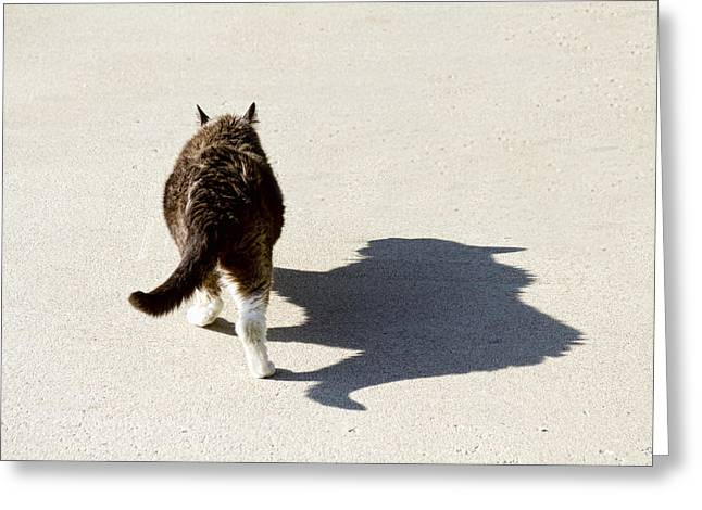 Courage Greeting Cards - Big Cat Ferocious Shadow Greeting Card by James BO  Insogna