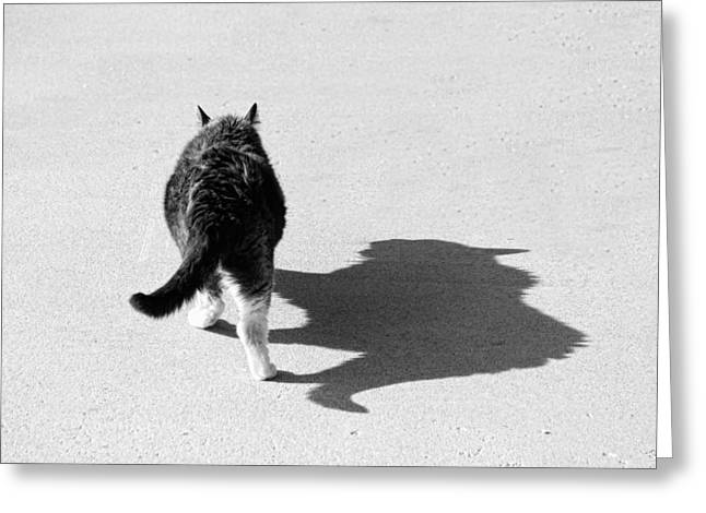 Big Cat Ferocious Shadow Monochrome Greeting Card by James BO  Insogna