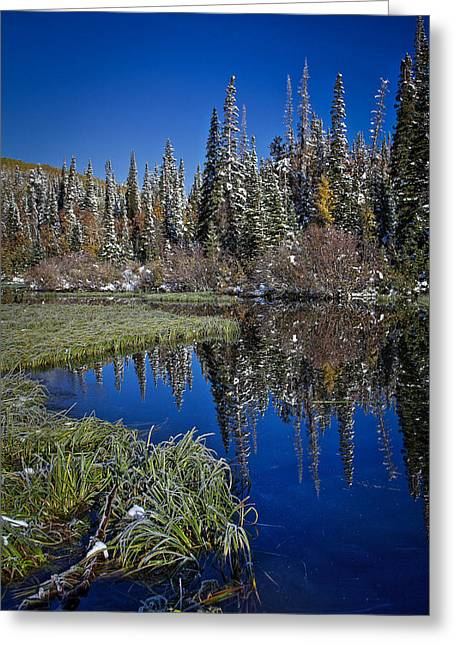 Trees Reflecting In Water Greeting Cards - Big Cottonwood Canyon  Greeting Card by Richard Cheski