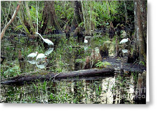 Wood Turtle Greeting Cards - Big Cypress Greeting Card by Carey Chen