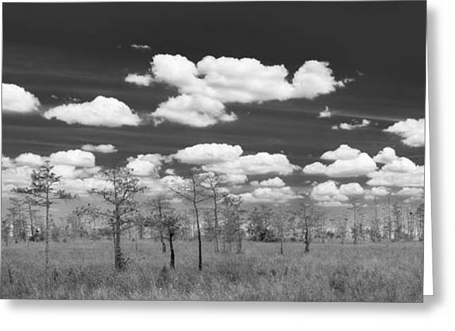 Botanical Greeting Cards - Big Cypress Prairie Greeting Card by Jon Glaser
