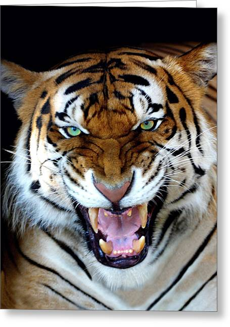 Growling Greeting Cards - Big D Greeting Card by Jody Tallal