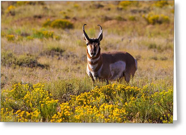 Southwest Wildlife Greeting Cards - Big Daddy Greeting Card by James Marvin Phelps