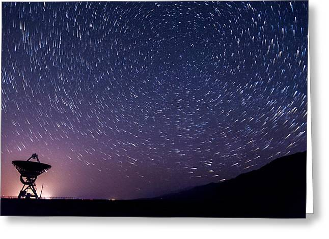 Stars Trail Greeting Cards - Big Ears Star Trails Greeting Card by Cat Connor