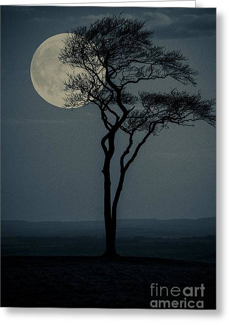 Deceptive Greeting Cards - Big Fat Full Moon Greeting Card by Wolf Kettler