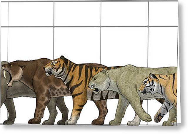 Lions Greeting Cards - Big Felines Size Chart Greeting Card by Vitor Silva