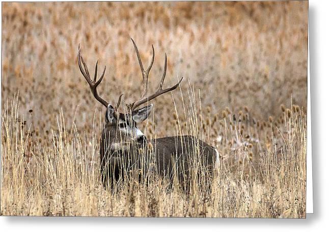 Mule Deer Buck Photograph Greeting Cards - Big Guy Greeting Card by Bruce J Barker