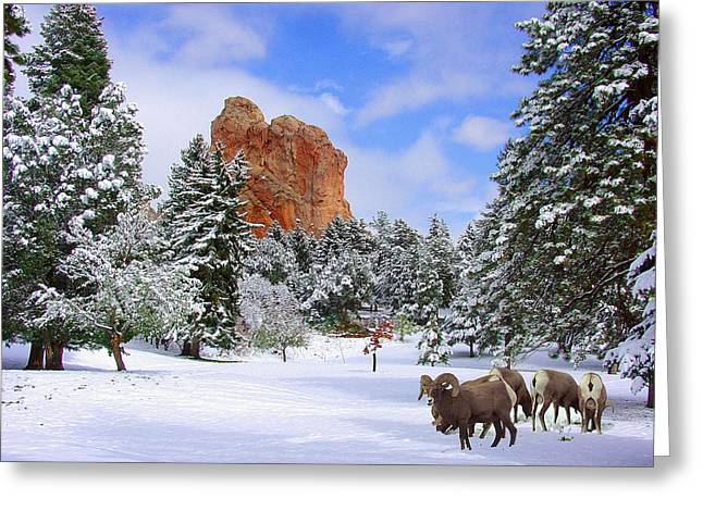 Big Horn Sheep At Glen Eyrie Greeting Card by John Hoffman