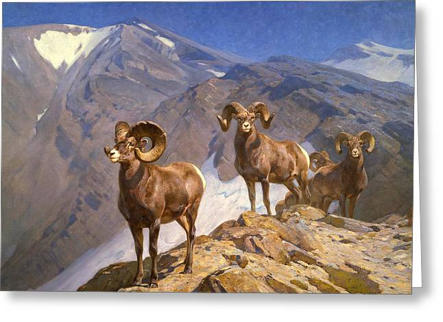 Big Horn Sheep On Wilcox Pass Greeting Card by Mountain Dreams