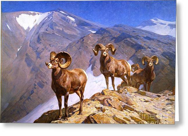 Big Horn Sheep - Wilcox Pass Greeting Card by Pg Reproductions