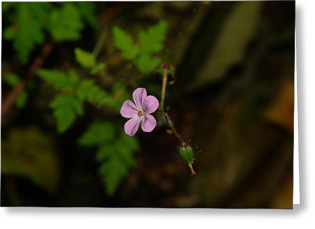 Small Flowers Greeting Cards - Big impression from tiny beauty Greeting Card by Jeff  Swan