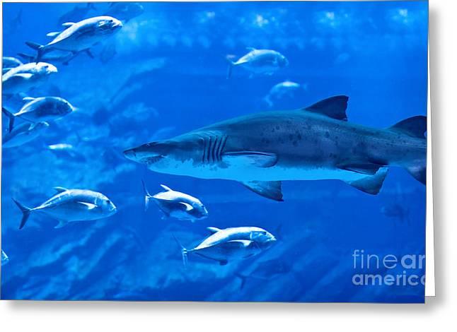 Deep Fears Greeting Cards - Big natural aquarium Greeting Card by Anna Omelchenko