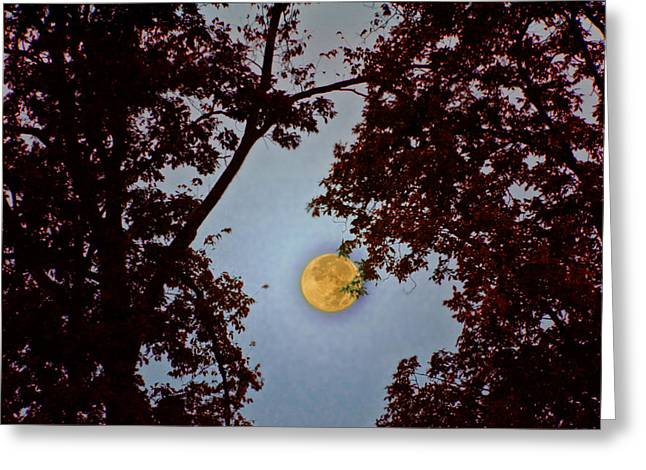 Harvest Moon Greeting Cards - Big Old Autumn Moon Greeting Card by Bill Cannon
