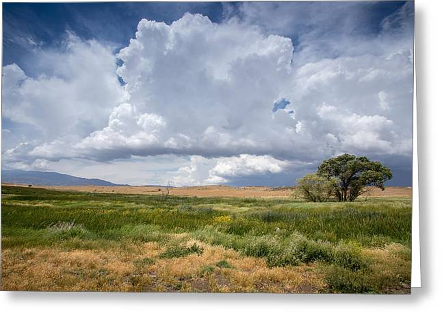 Big Sky Greeting Cards - Big Sky and Tree Greeting Card by Peter Tellone