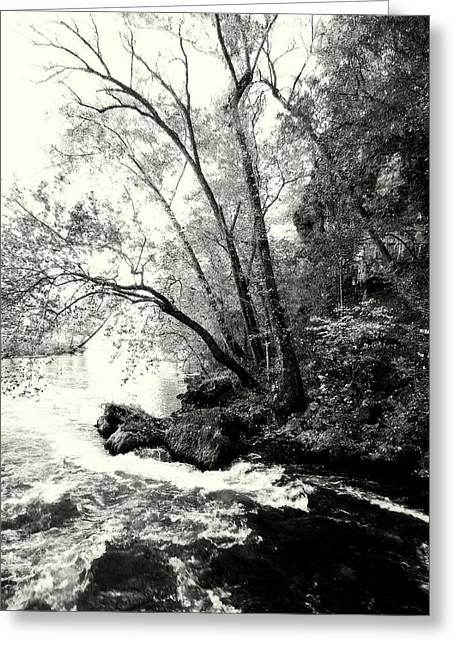 Big Spring In B And W Greeting Card by Marty Koch