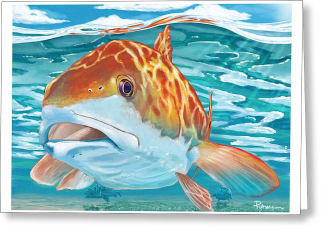 Redfish Greeting Cards - Big Studs Greeting Card by Kevin Putman