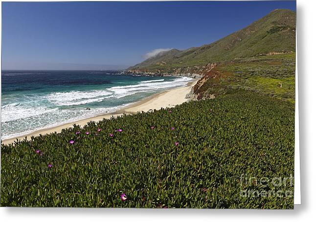 Big Sur Greeting Cards - Big Sur Coast Spring Scenic Greeting Card by George Oze