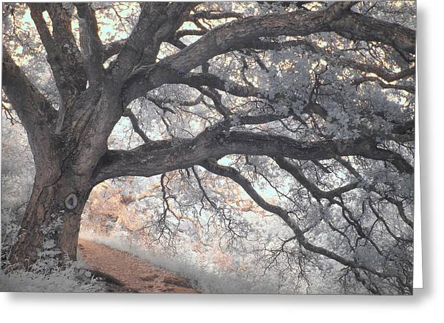 Big Sur Greeting Cards - Big Sur Oak Greeting Card by Jane Linders