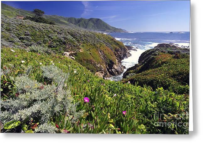 Big Sur Beach Greeting Cards - Big Sur Spring Vista Greeting Card by George Oze