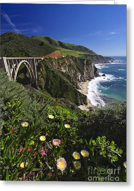 Big Sur Wildflower Bloom  Greeting Card by George Oze