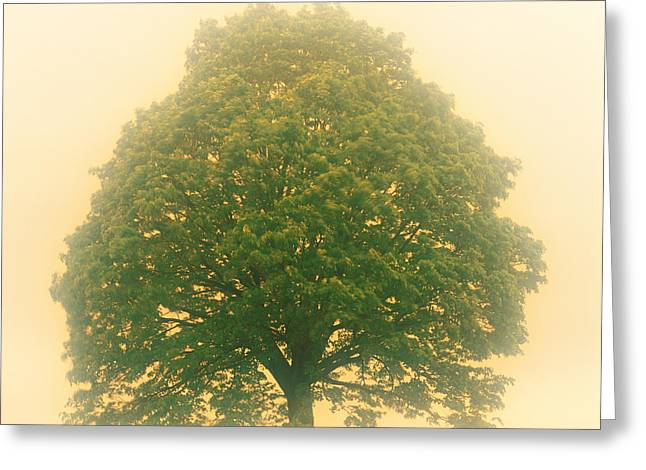 Serenity Scenes Landscapes Greeting Cards - Big Tree In Early Morning Mist Greeting Card by Panoramic Images